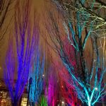 bare winter trees uplit with colorful lights