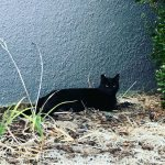 black cat chilling by wall