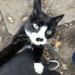 black and white cat climbing leg