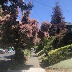 portland summer trees