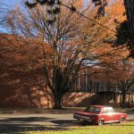 vintage red car under fall tree