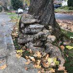 bulbous tree growth